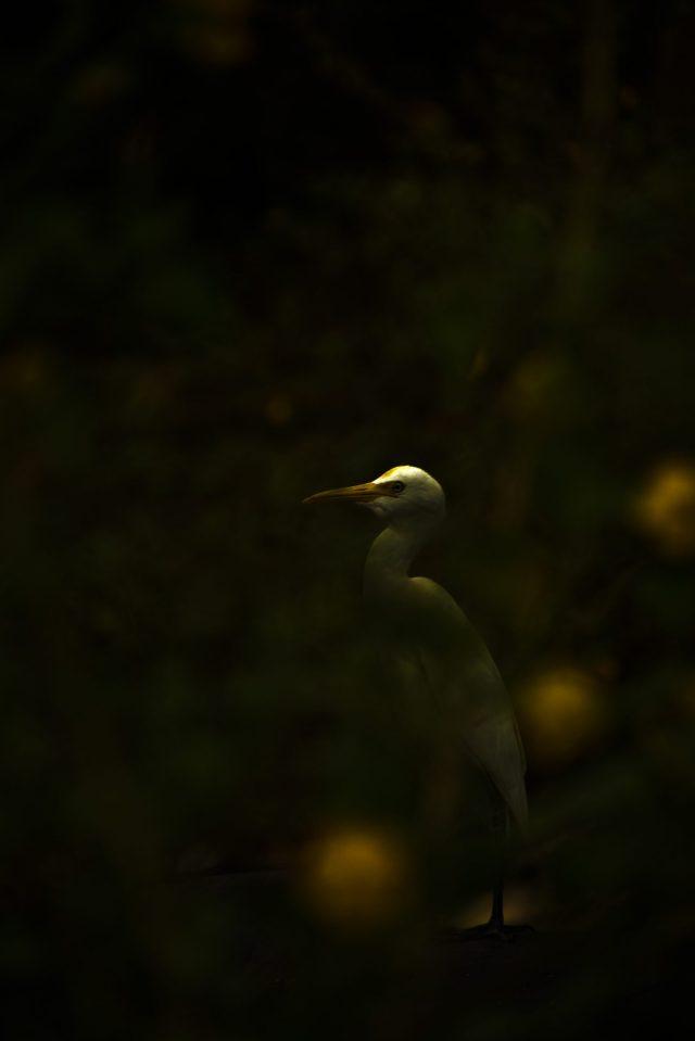 Bird in darkness