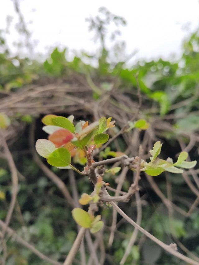 Little plant in farm