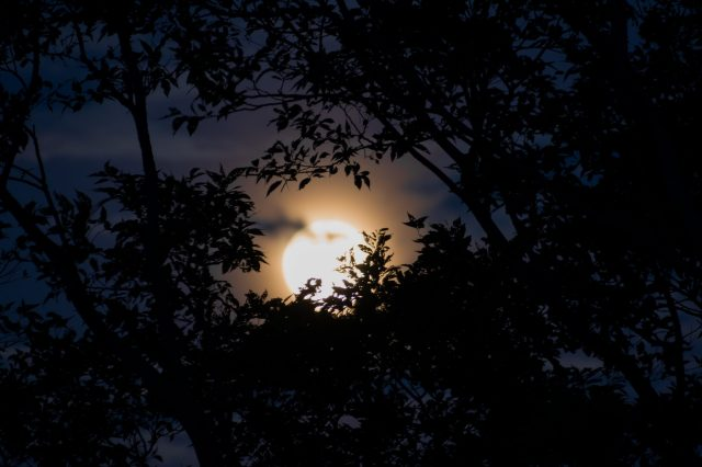 Moon view through the tree