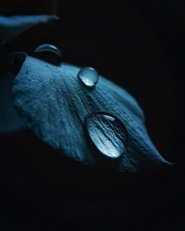 Water Droplet On a Petal