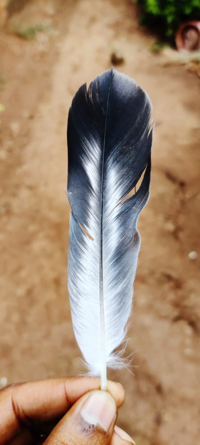 A bird's feather in hand