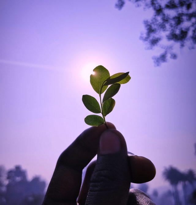 A plant leaves in hand