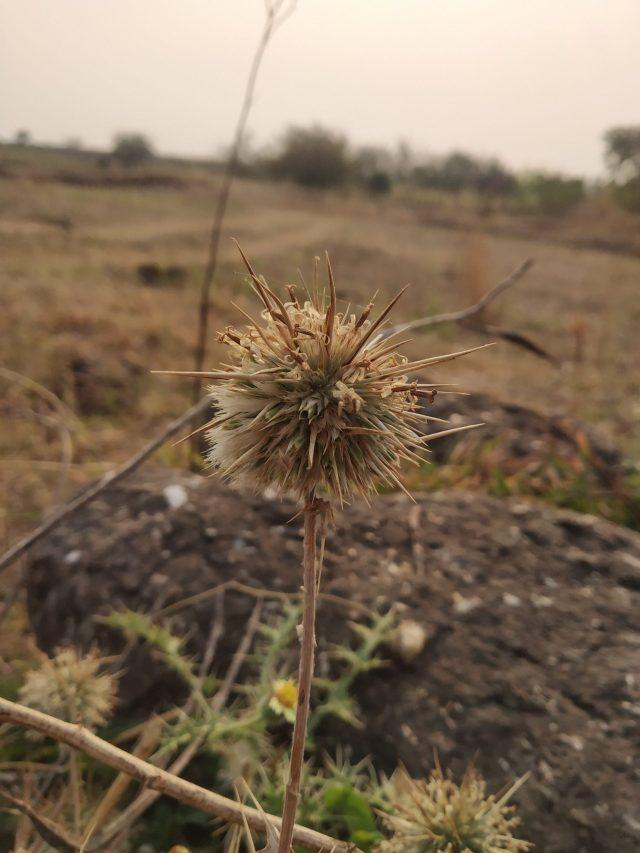A thorny plant