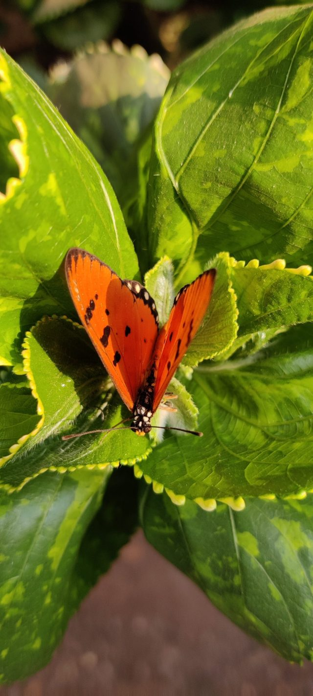 A butterfly on green leaves