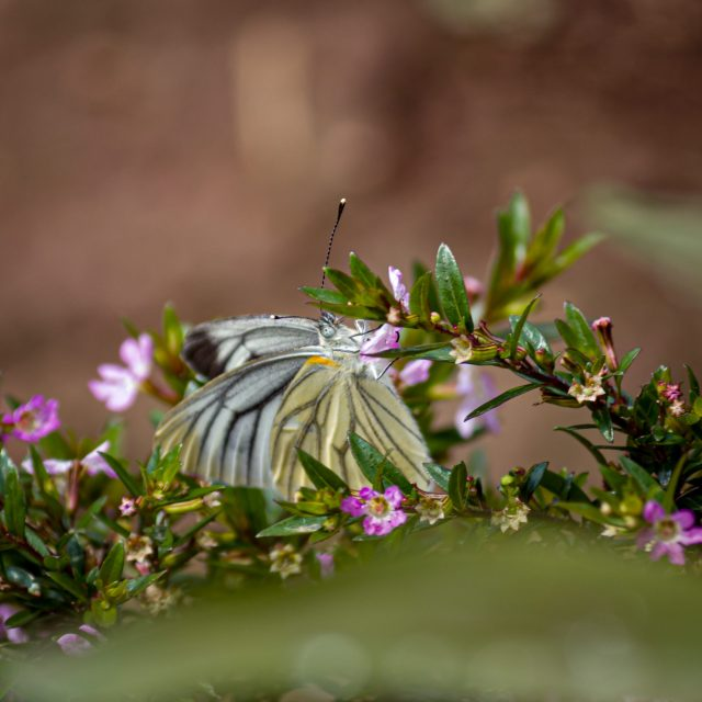 A butterfly on a branch