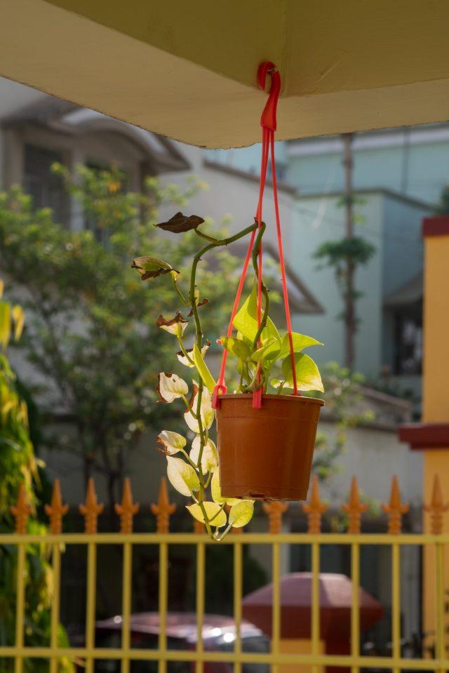 A hanging flower pot