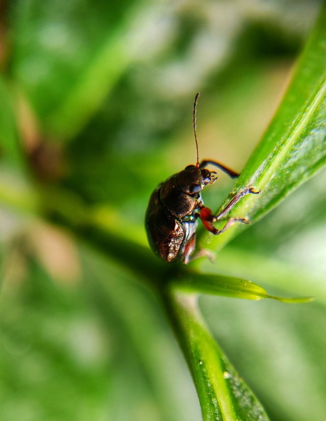 An insect on a plant