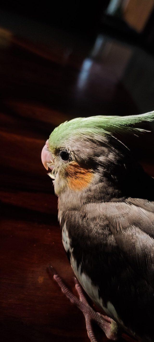 Bird macro view