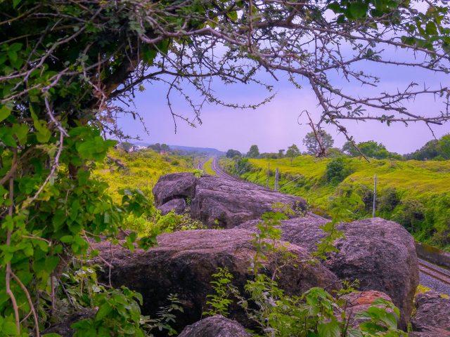 Rocks and greenery near a railway track