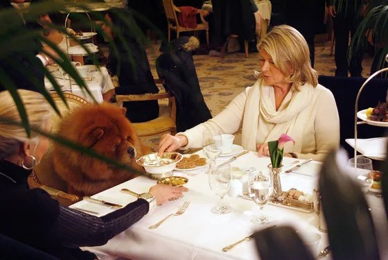 Martha Stewart== Martha Stewart Having Lunch with her dog at the Plaza== The Plaza, NYC== February 12, 2012== ©PatrickMcmullan.com== photo-Sylvain Gaboury/PatrickMcmullan.com== ==