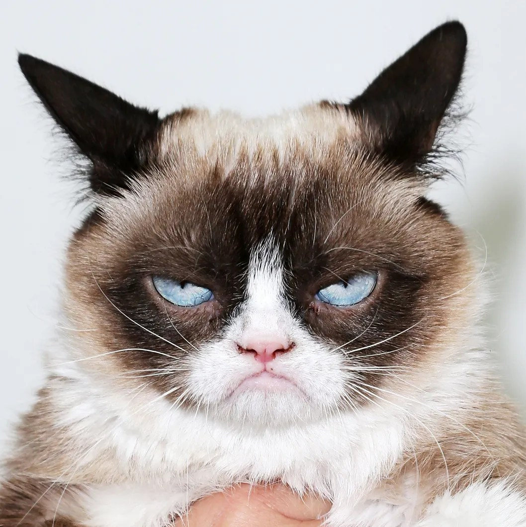 """""""The Grumpy Guide To Life: Observations By Grumpy Cat"""" Book Launch Party"""