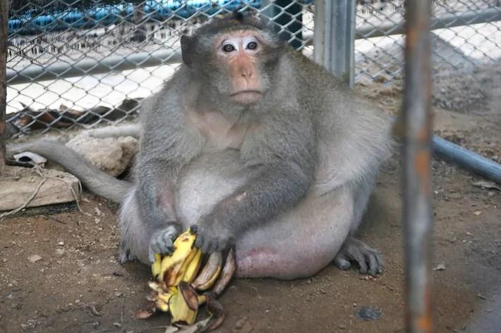 https://i2.wp.com/pixel.nymag.com/imgs/fashion/daily/2017/05/19/19-Uncle-Fat-thai-monkey.w710.h473.jpg?w=1140&ssl=1