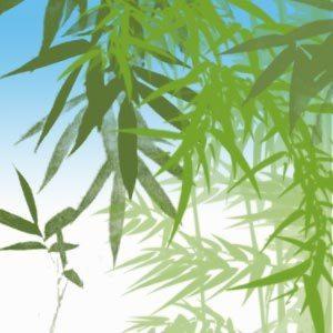 Bamboo - Brushes Photoshop