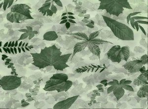 Leaves - Brushes Photoshop