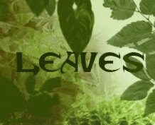 Leaves - Photoshop Brushes
