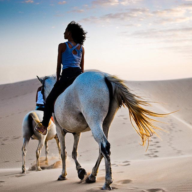 horse_photography_11