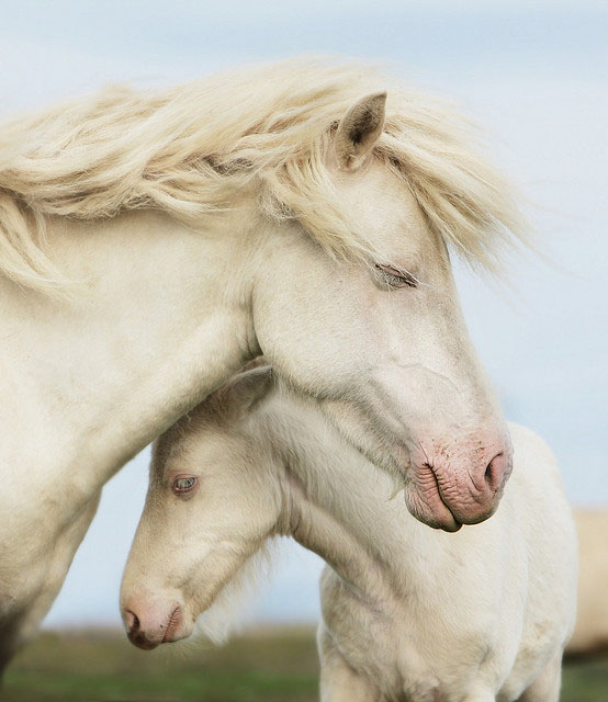 horse_photography_2