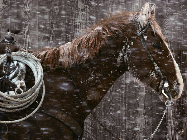 padlock-ranch-horse-montana_15