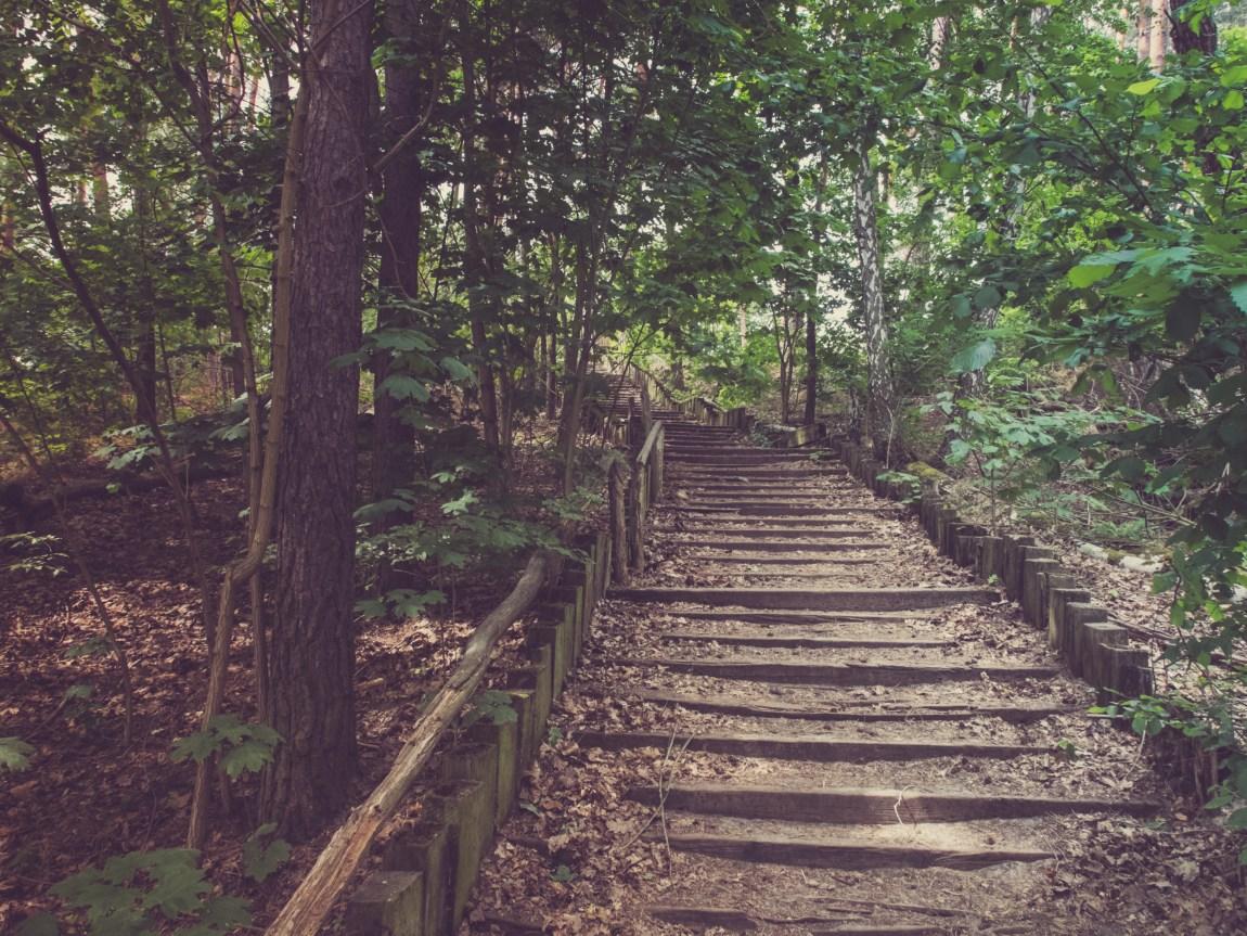 Treppen an der Krummen Lanke