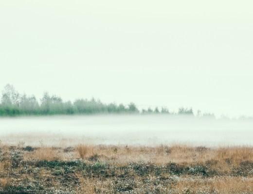 Nebel über dem Hiller Moor