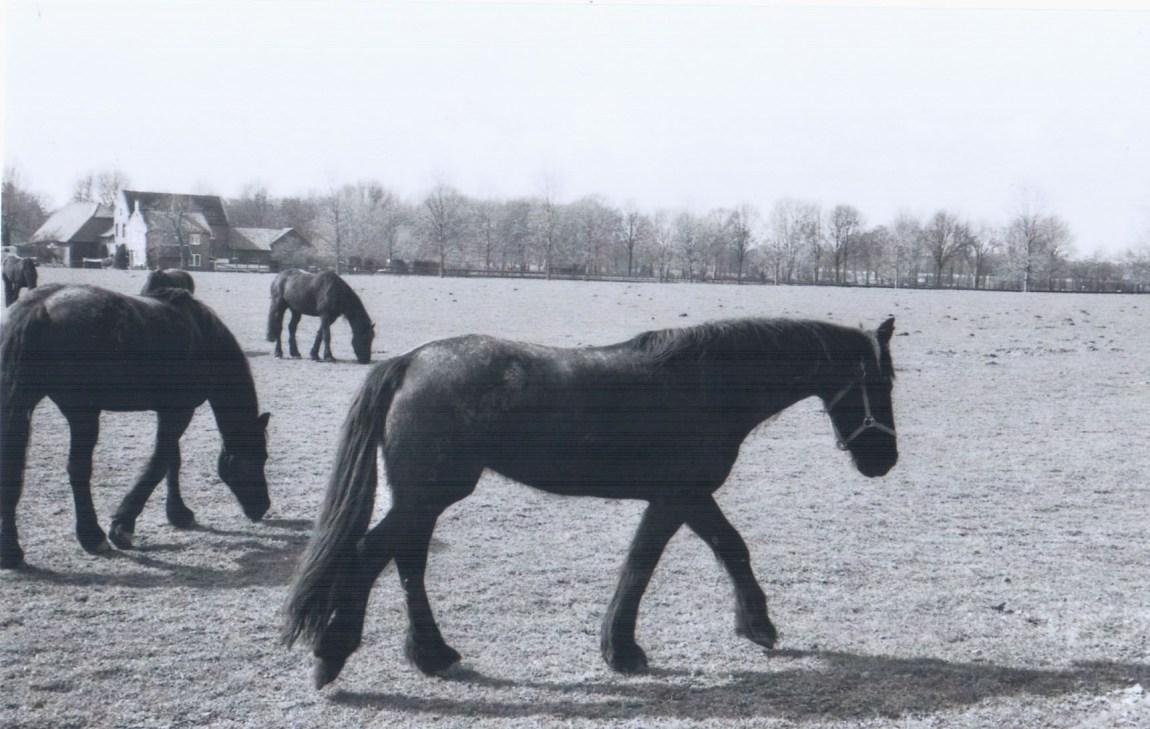 Pferde II - Menschen, Tiere, Sensationen