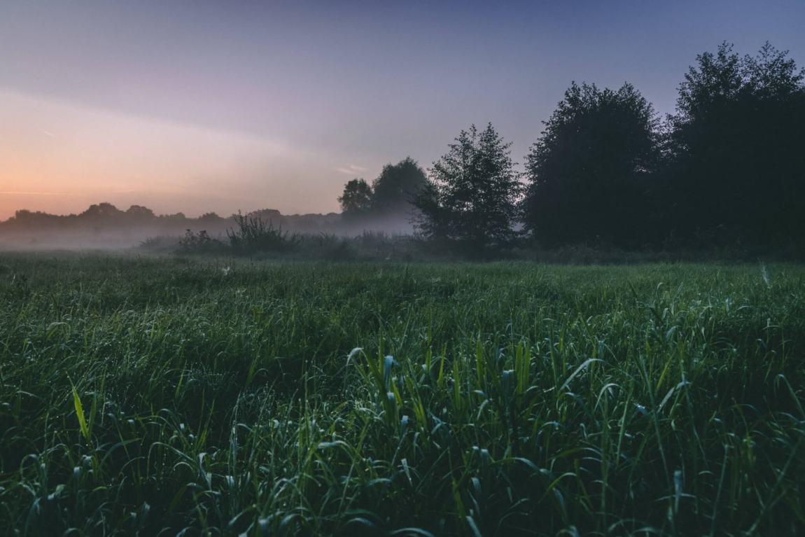 Guten Morgen - Nebel über Hamm