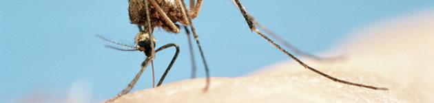 комарац1
