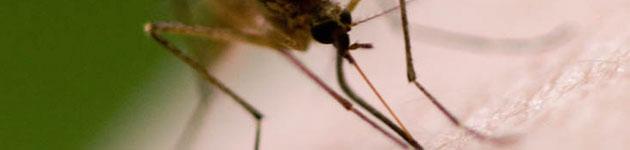 комарац2