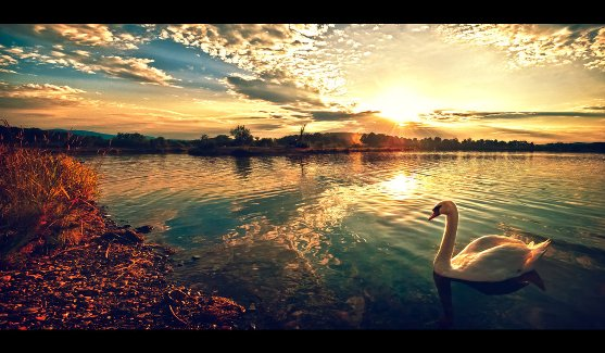 Once upon a swan by TomekKarol