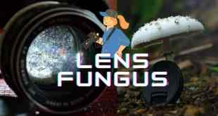 lens fungus removal guide