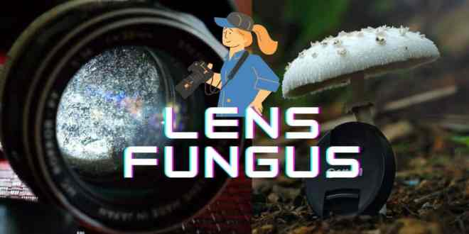 Easy Tips to Remove Lens Fungus