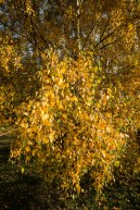 Epping Forest Colour 3