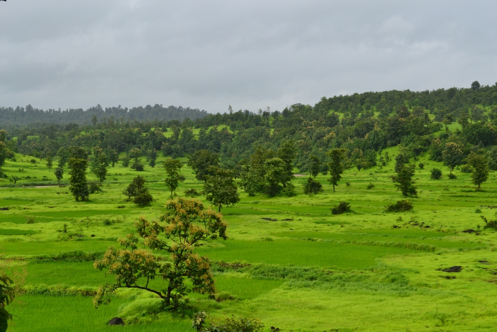Khardi's rolling hills covered with green during monsoon