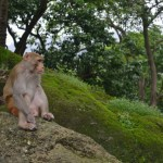 Monkey sits peacefully at Borivali National Park