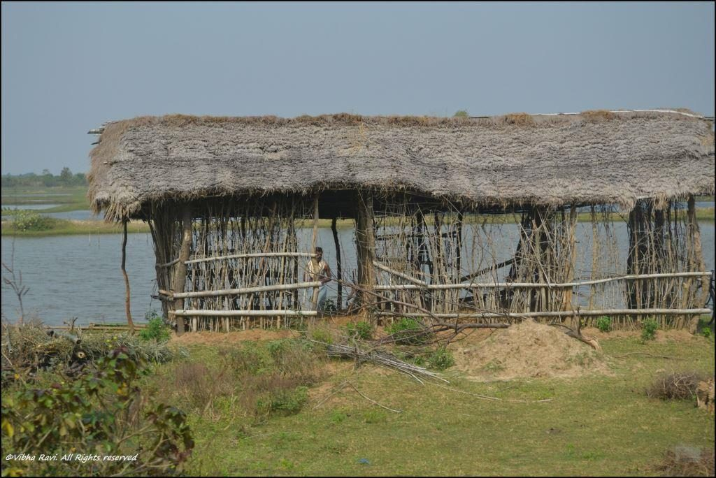 Thatched hut along the highway to Chilika