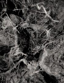 Woodland Synapse