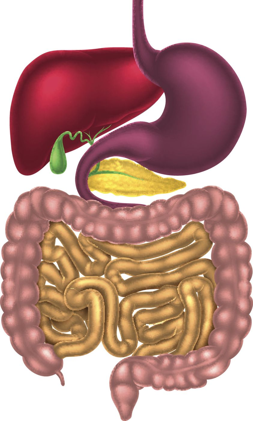 Appendix Location - Where is Your Appendix - Bodytomy