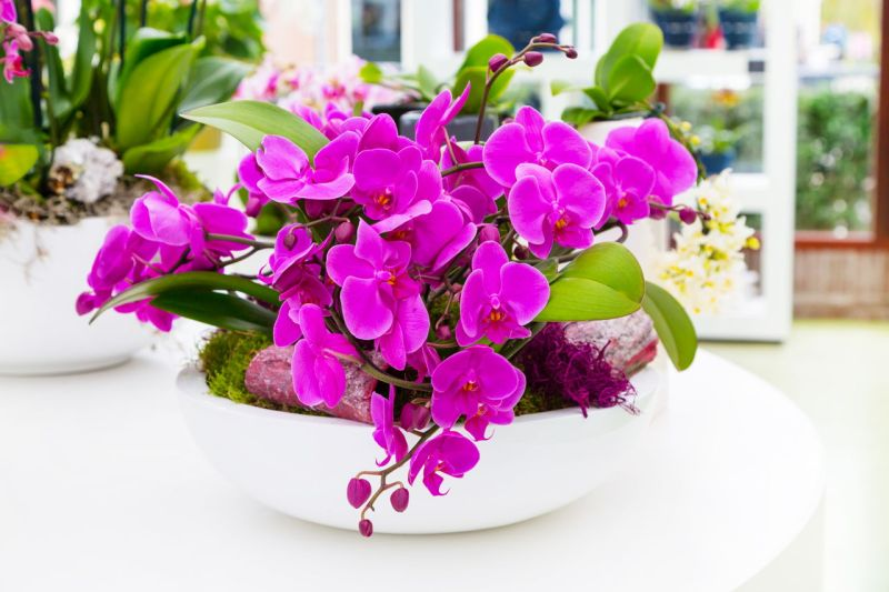 Meaning Of An Orchid Flower As A Gift Classy World