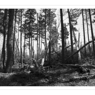 Forêt profonde - Deep forest