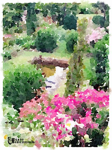Lower terrace - September 2014 (frog pond) - pixieperennials.com#Waterlogue