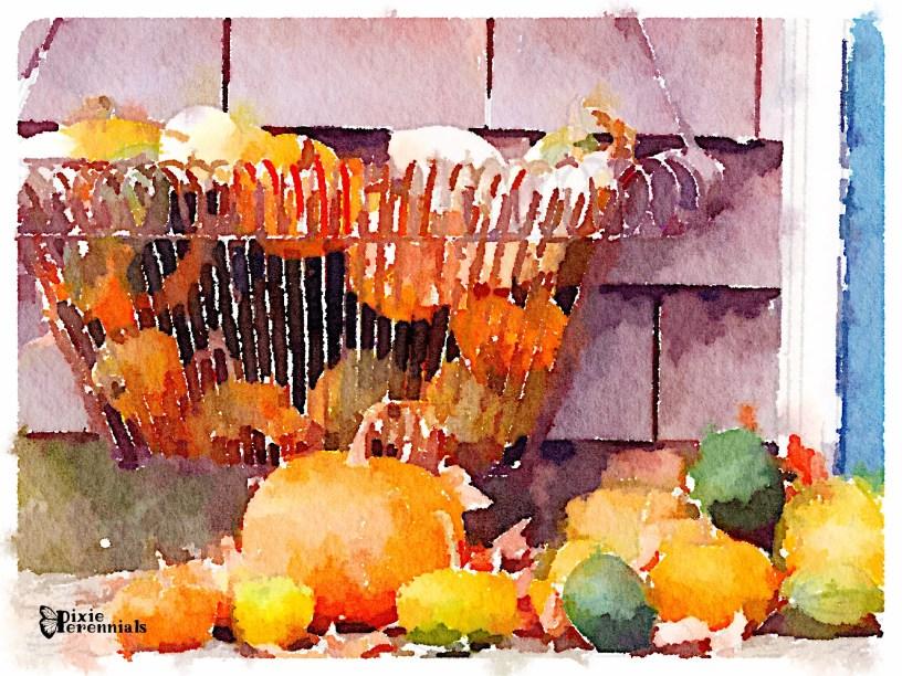 Homegrown pumpkins and gourds - pixieperennials.com