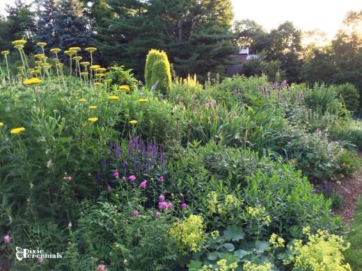 Back garden June 2015 - pixieperennials.com