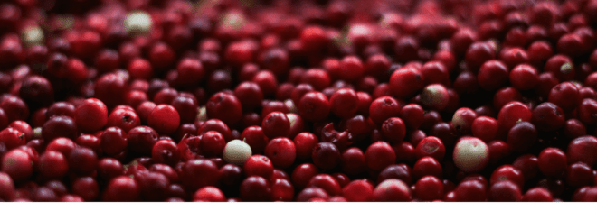 cranberry-cordial-header