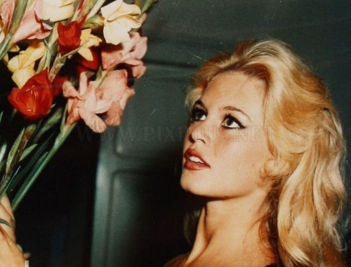 Brigitte Bardot Then And Now Celebrities