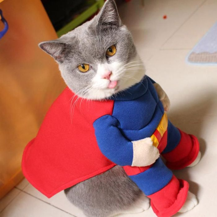 Cats Wearing Capes Animals