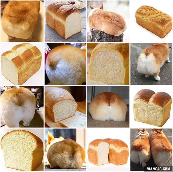 corgi-or-loaf-of-bread