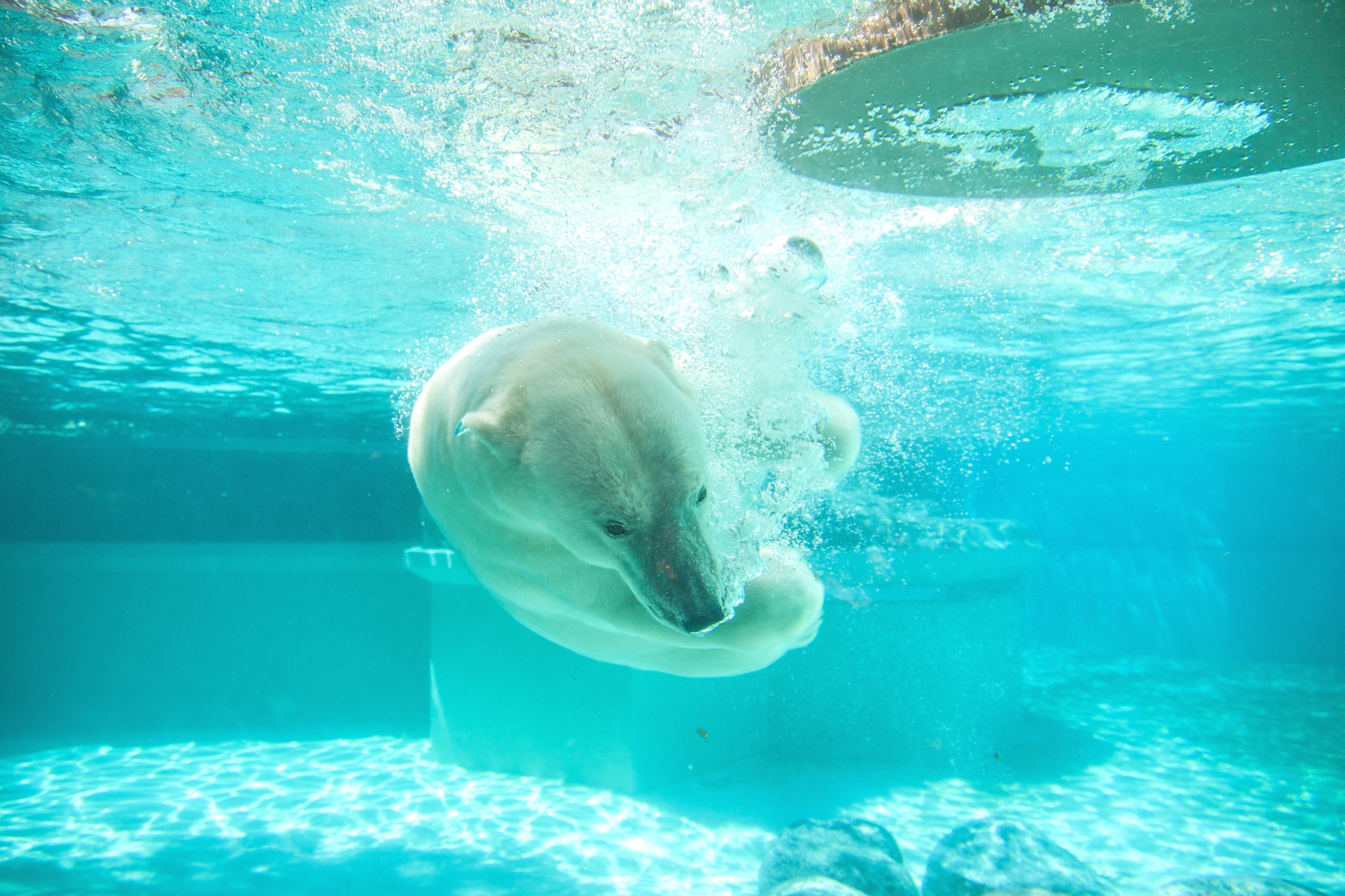 Free picture: vertebrate, 具有, animals