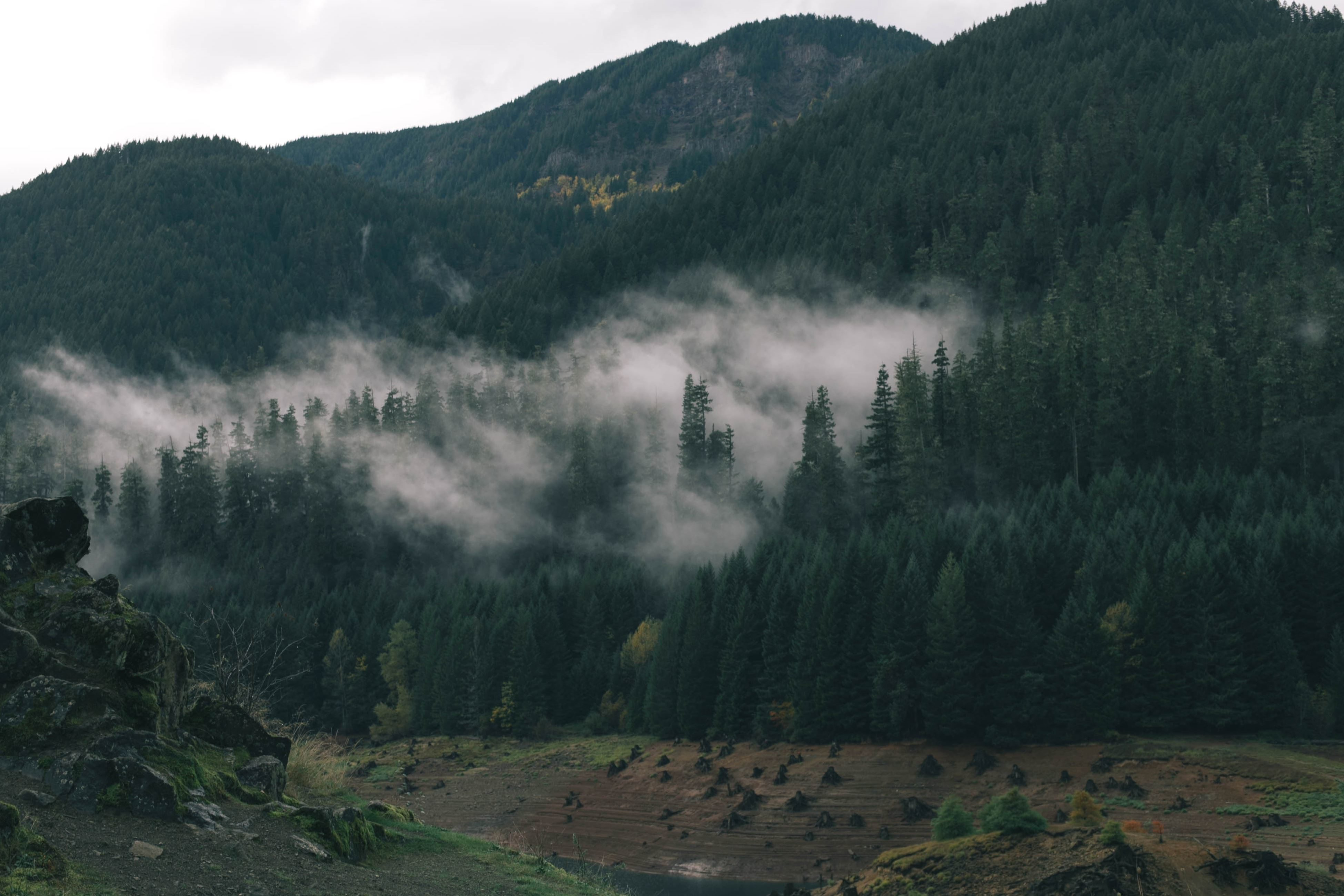 Free Picture Mountain Mist Mountains Nature Tree Fog
