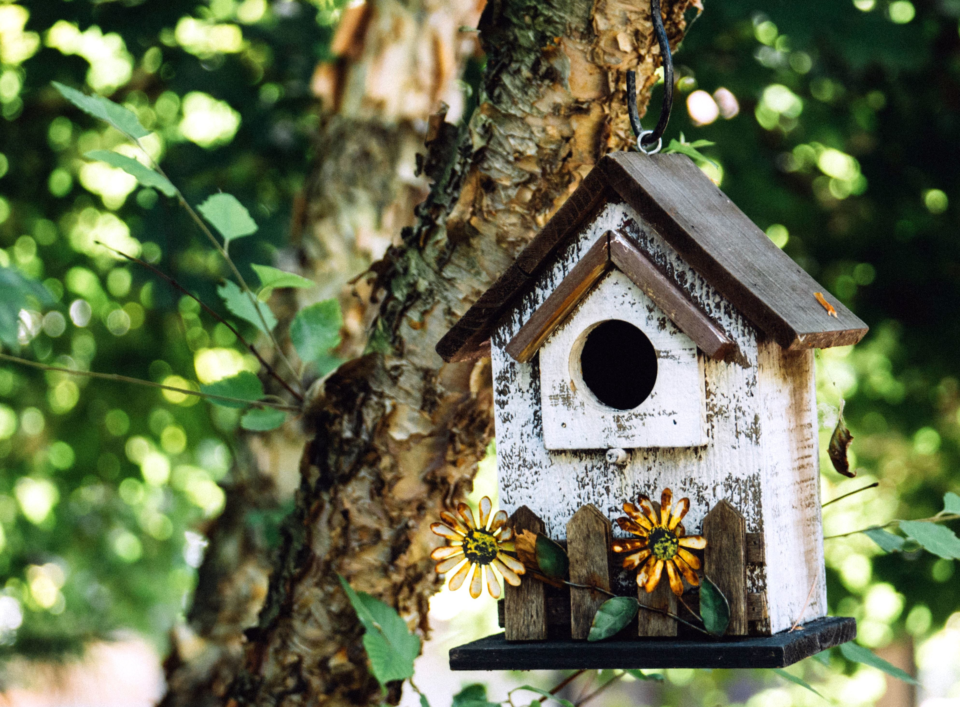 Free Picture Garden Leaves Bird House Branch Tree