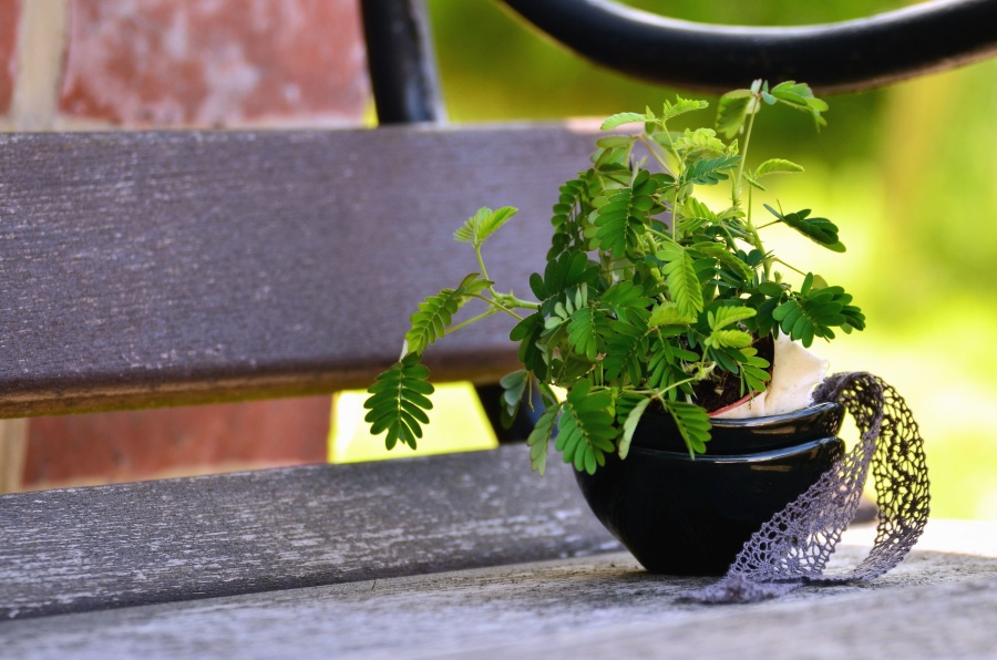 Free Picture Bench Metal Plank Plant Leaf Flower Pot